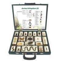 Qianfan Animal Kingdom (II) Embedded Specimen for Life Science