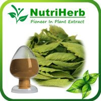 Natural Senna leaf Extract Sennosides(Sennoside A+B) 2.5%-20% thumbnail image