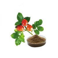 10:1 Polyphenol Nutrition Supplements Rose Hip Extract