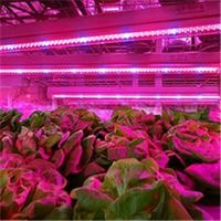 Full Spectrum T8 T5 Plant LED Grow Light Tube thumbnail image