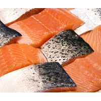 Frozen Fresh Salmon Fish
