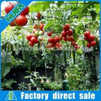 Hot-sale Low Cost Agricultural Single-span Green House For Vegetables