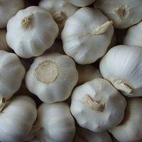 fresh white garlic thumbnail image