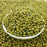 Fresh Green Mung Beans thumbnail image