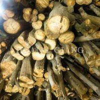 Aquilaria Trees (logs)