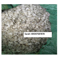DRIED FISH SCALE FOR COLLAGEN HIGH QUALITY AND GOOD QUOTE VIETNAM +84347587878