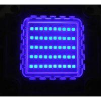 Best 50W 430nm High Power LED for Plant Grow lighting