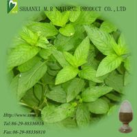 Mint Extract-Kosher certified manufacturer