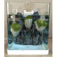 Avatar pumice stones