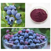 Bilberry Extract 100% Natural Blueberry Extract/Bilberry Extract thumbnail image