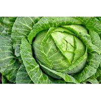 cabbages thumbnail image