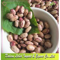 Light Speckled Kidney Beans Round Shape Or Pinto Beans