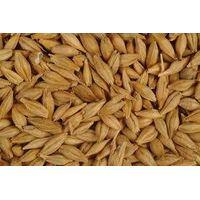 Barley,wheat,soft milling cow powder milk