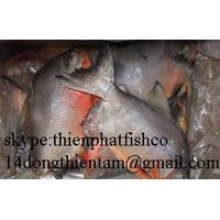 we supply red pomfret with good price , have COC to iraq thumbnail image