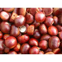 Chestnut / Chestnut Kernel / Chestnut Supplier / Chestnut Supplier /Chestnut Price