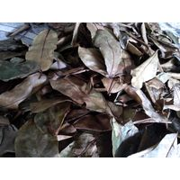 Dried Soursop Leaves Vietnam For Export 0084817092069 Whatsapp