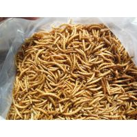 High nutritious dried mealworms for birds feeding