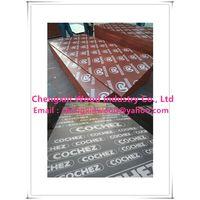 Film Faced Plywood Shandong Manufacturer