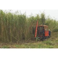 Reed Harvester