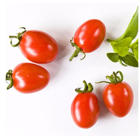 fi hybrid red tomato greenhouse seed for sale SXTS2008