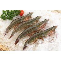 frozen vannamei shrimp Raw HOSO thumbnail image