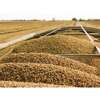 Premium Soybean (Several Varieties) For Human Consumption