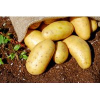 Potato thumbnail image