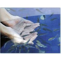 Skin Disease Remover--Doctor Fish Treatment