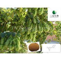 Humulus Iupulus (sales05@3wbio.com) thumbnail image