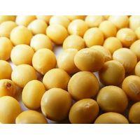 Soybean Extract thumbnail image