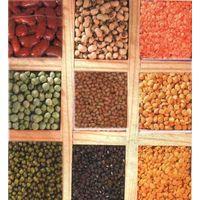 Pulses Beans Lentil thumbnail image