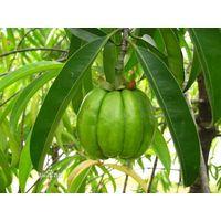 100% Natural Garcinia Cambogia Extract