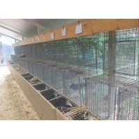 mink wire mesh cage thumbnail image