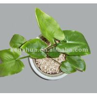 Horticulture vermiculite thumbnail image