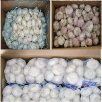 normal garlic fresh garlic from jinxiang China