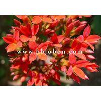 rhodiola rosea extract (salidroside)