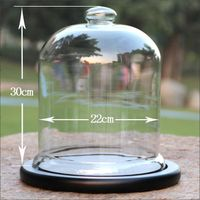 Display Bell Jar With Wood Base D20xH30cm