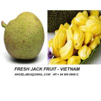 Fresh jack fruit, Frozen jack-fruit thumbnail image