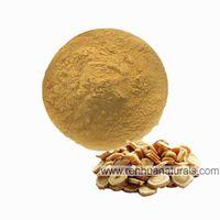 Manufacture Astragalus Root Powder, Astragalus Powder, milkvetch Extract, Astragalus Root Extract, thumbnail image