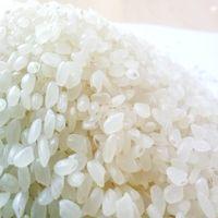 JAPONICA RICE SUSHI RICE 5% BROKEN