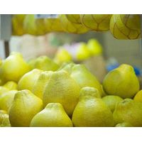 FRESH POMELO (GRAPE FRUIT)