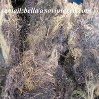 OFFER OF DRIED GRACILARIA FOR AGAR AGAR (skype : fiona sovimex)