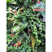 Grade A Vietnam black pepper (+841642828779)