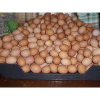 Fresh Eggs thumbnail image