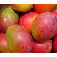Mango thumbnail image