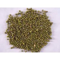 HPS Sprouting  mung beans(GF1)