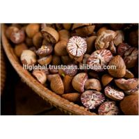 BETEL NUT FROM VIETNAM WITH BEST PRICE thumbnail image