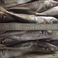 Seafood and fresh frozen Crabs, Shrimps, Fishes thumbnail image