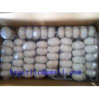 Pure white garlic from china crop 2013