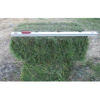 ALFALFA HAY PRICING